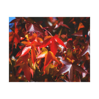 Maple leaves kissed by autumn canvas print