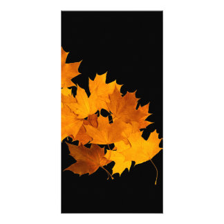 Maple leaves picture card