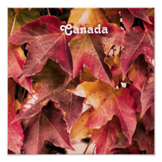 Maple Leaves Posters