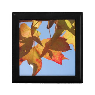 Maple Leaves Small Square Gift Box