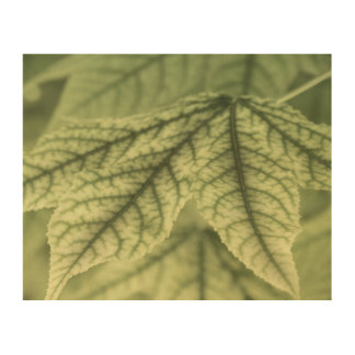 Maple Leaves Wood Canvases