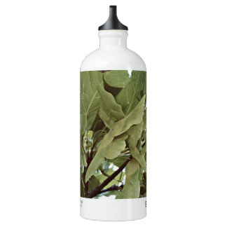 Maple seeds | SIGG traveller 1.0L water bottle