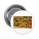 Maple Splendour Pinback Button