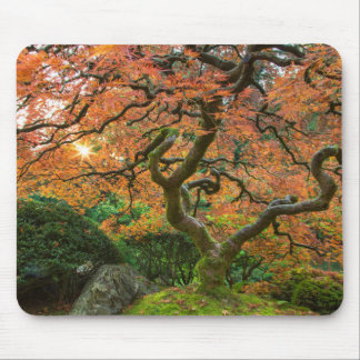 Maple Tree At The Japanese Gardens In Autumn Mouse Pad