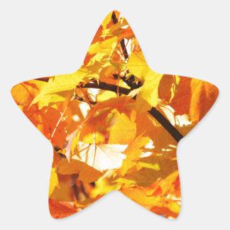 Maple tree autumn leaves star sticker