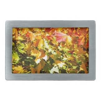 Maple tree in autumn belt buckle