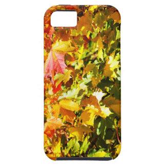 Maple tree in autumn tough iPhone 5 case