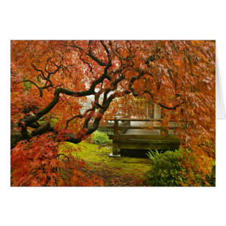 Maple Tree in Japanese Garden Photo Greeting Card