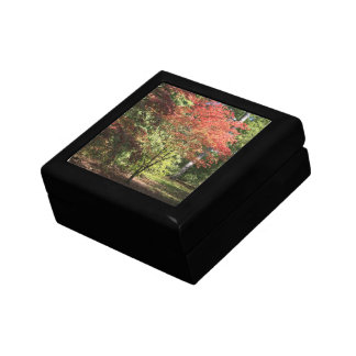 Maple Tree in the Fall Gift Box