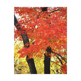 Maple Tree Wrapped Canvas Gallery Wrapped Canvas