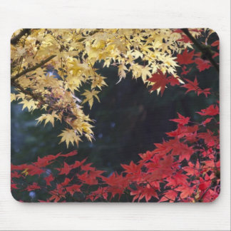 Maple trees in autumn color mouse pad