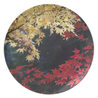 Maple trees in autumn color plate
