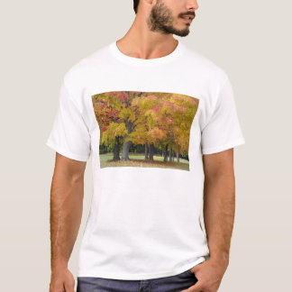 Maple trees in autumn colors, near Concord, T-Shirt