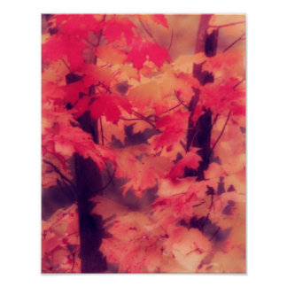 Maple Trees in Fall Poster