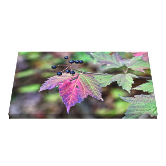 Mapleleaf Viburnum Autumn Leaves and Berries Stretched Canvas Print
