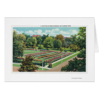 Maplewood Park Rose Garden View Greeting Card