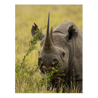 Mara Triangle, Masai Mara Game Reserve, Kenya, Postcard