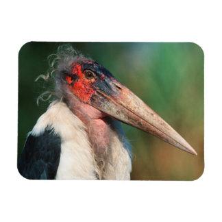 Marabou Stork (Leptoptilos Crumeniferus) Rectangular Photo Magnet