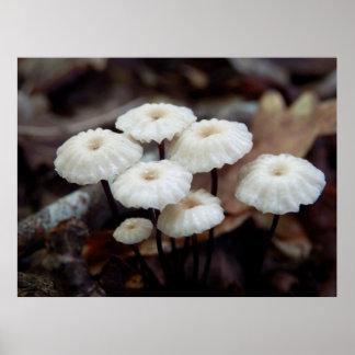 Marasmius rotula Mushroom Poster