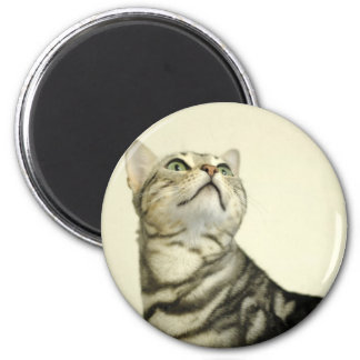 Marble Bengal Cat Magnet