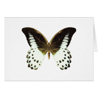 Marble Swallowtail Butterfly Card