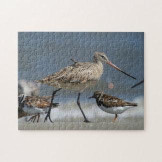 Marbled godwit (Limosa fedoa), Little St Simon's Jigsaw Puzzle