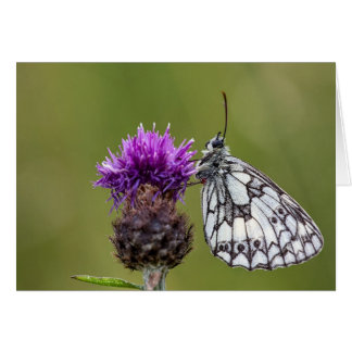 Marbled White Butterfly - Greeting Card