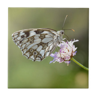 Marbled White butterfly on flower Ceramic Tile