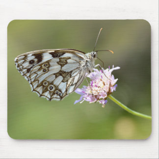 Marbled White butterfly on flower Mousepads