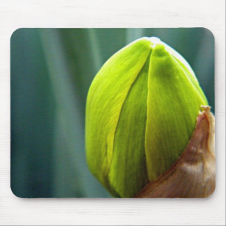 March Flower Bud Mouse Pad
