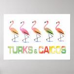 March of the Tropical Flamingos TURKS & CAICOS