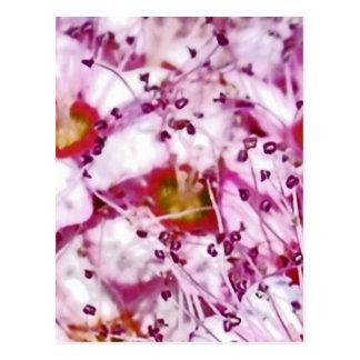 Märchen Blumen Postkarten