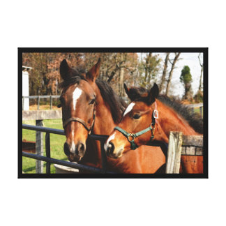 Mare and Colt Gallery Wrap Canvas