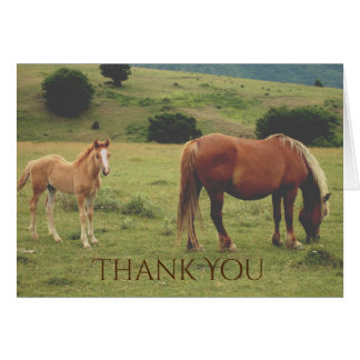 Mare and Foal Grazing on Hillside Horse Thank You Card