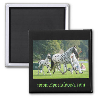 mare and foal magnet