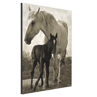Mare & Colt Gallery Wrap Canvas