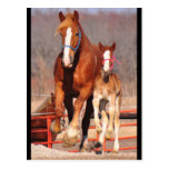 Mare & Filly Postcard