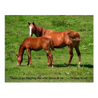 Mare Foal Postcard