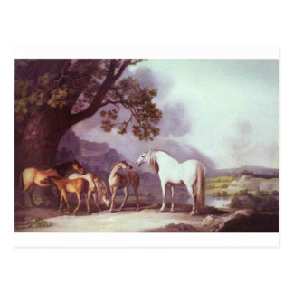 Mares and Foals in a Mountainous Landscape Postcard