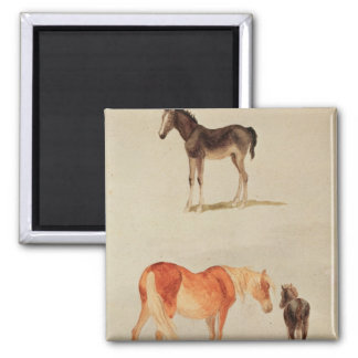 Mares and foals square magnet