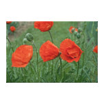 Margaret's Poppy Canvas Gallery Wrap Canvas