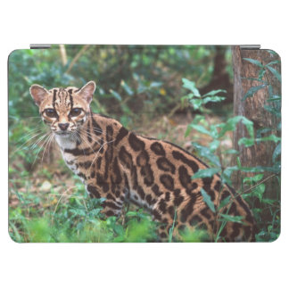 Margay, Leopardus wiedi, Native to Mexico into iPad Air Cover