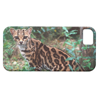 Margay, Leopardus wiedi, Native to Mexico into iPhone 5 Cover