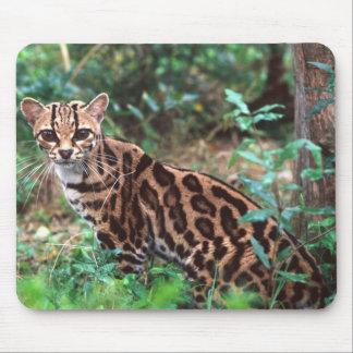 Margay, Leopardus wiedi, Native to Mexico into Mouse Mat