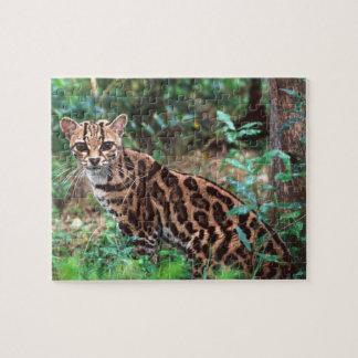 Margay, Leopardus wiedi, Native to Mexico into Puzzle