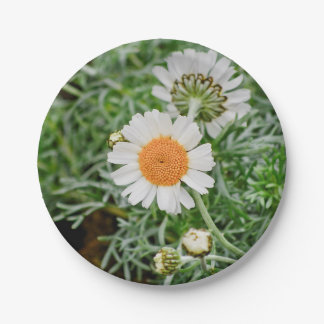 Marguerite 7 Inch Paper Plate
