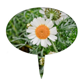 Marguerite Cake Toppers