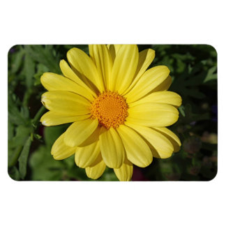 Marguerite Daisy Summer 2015 Rectangular Photo Magnet
