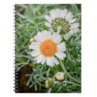 Marguerite Note Books