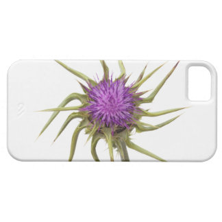 Marian thistle 2 iPhone 5 covers